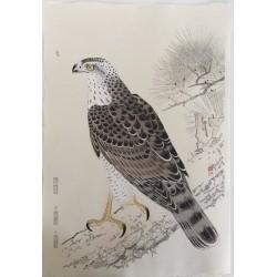 Suiko Fukuda - Le faucon