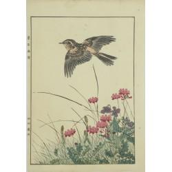 Iamo Keinen oiseau ces quatre saisons le printemps