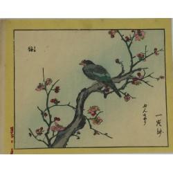 Oiseau et fleurs de prunier