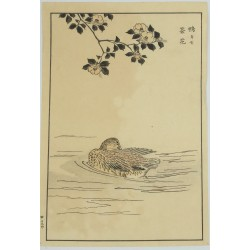 Inconnu - Le canard