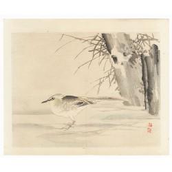 Kono Bairei - L'oiseau