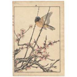 Imao Keinen de l'album des oiseaux des quatre saison le printemps avec un oiseau sur un cerisier en fleurs
