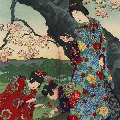 Cerisiers en fleurs sur le bord de la Sumida